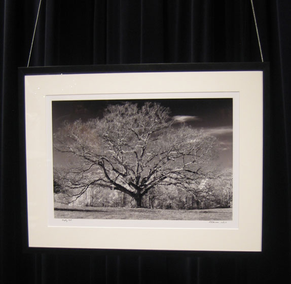 This is a photograph by Larry Lederman. He has been working on a series of trees over the seasons; he has a show up now at the New York Botanical Gardens, in the Bronx.
