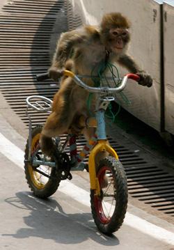 Monkey Loose At La Guardia