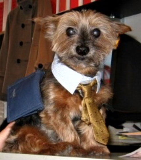 "Mr. Phoo is the CEO of a website called <a href=""http://www.gangsofnewyorkie.com/index.html"">Gangs of New Yorkie</a>."