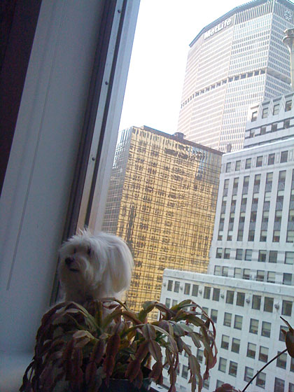 Sometimes when Sammy feels like she is out of ideas, she looks out the office window and is again filled with inspiration.