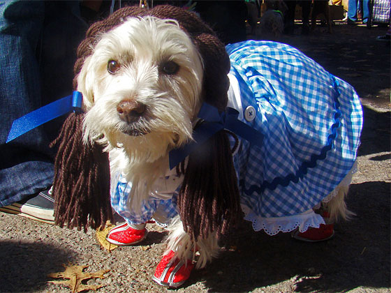 """What the hell kind of Dorothy costume is this? My ruby slippers aren't even sparkly."""