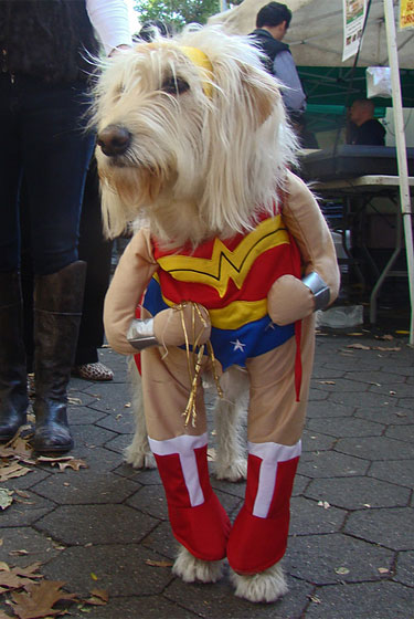 Is anyone else creeped out a little bit by these costumes that make dogs look like people? Just wondering.