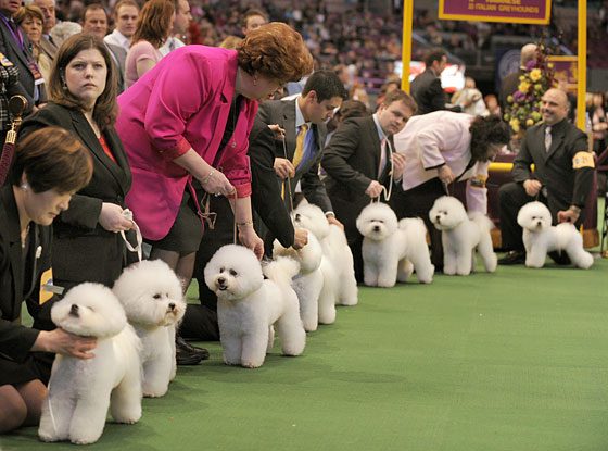 These dogs will be easily coerced into Sadie's robot dog army, of that we have no doubt.