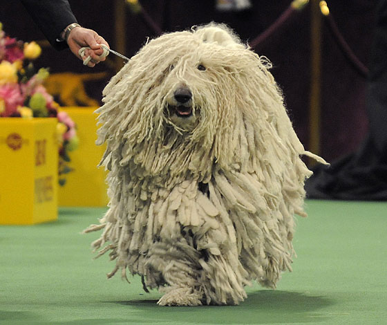 We suspect this dog didn't win because its look was too nineties.