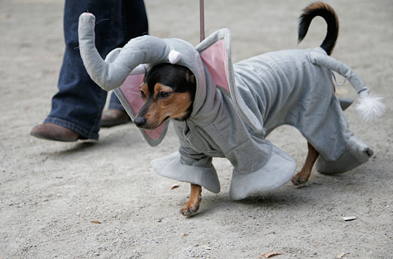 Why else would they have dressed him as an elephant? Huh? Why?