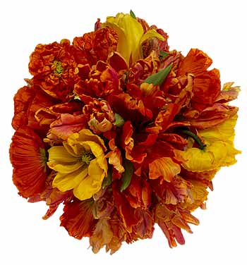 Re Orange and Red Wedding Color Ideas Posted Jul 20 2007 1123 AM Go to